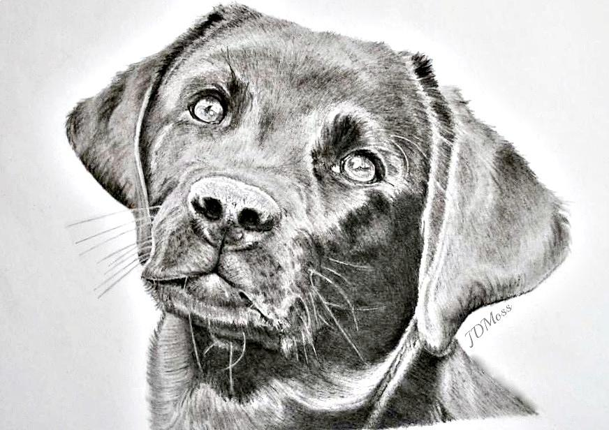 Dog Drawing - Where Is My Bone by Janet Moss