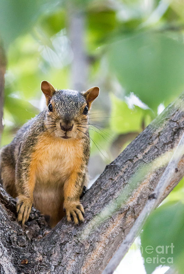 Squirrel Photograph - Where Is My Peanut by Robert Bales