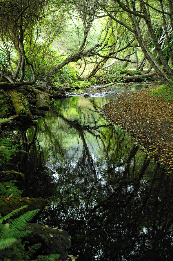 Forest Photograph - Where Magic Happens by Donna Blackhall