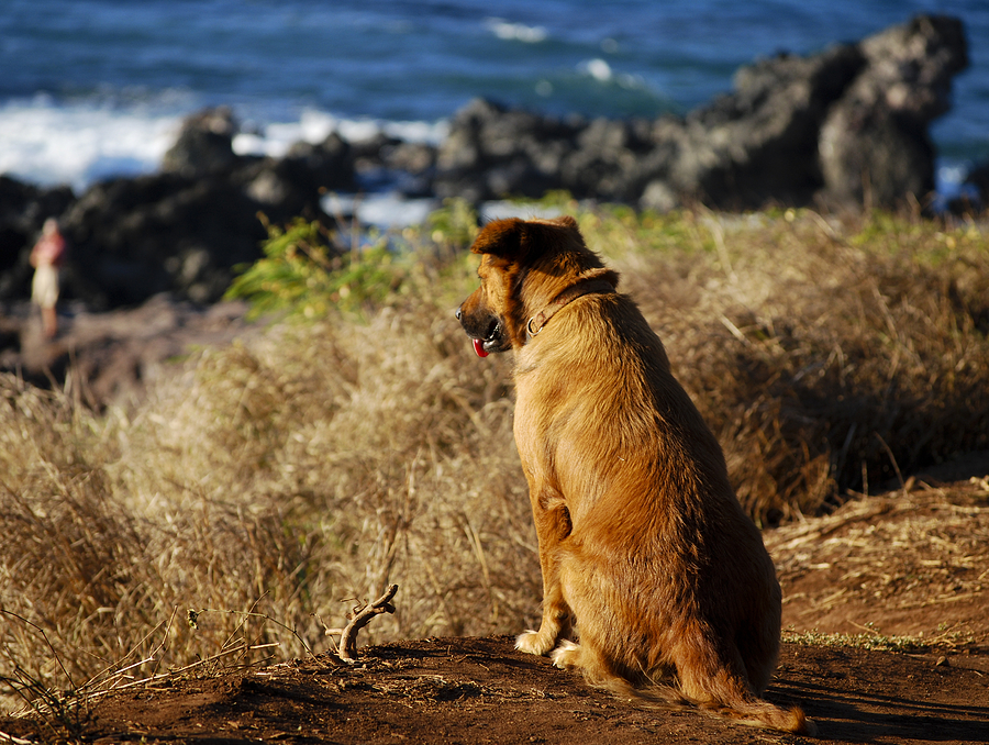 Hawaii Photograph - Wherever You Go Let Me Go Too by Christi Kraft