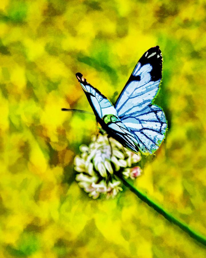 Whimsical butterfly on a flower painting by tracie kaska for Butterfly on flowers