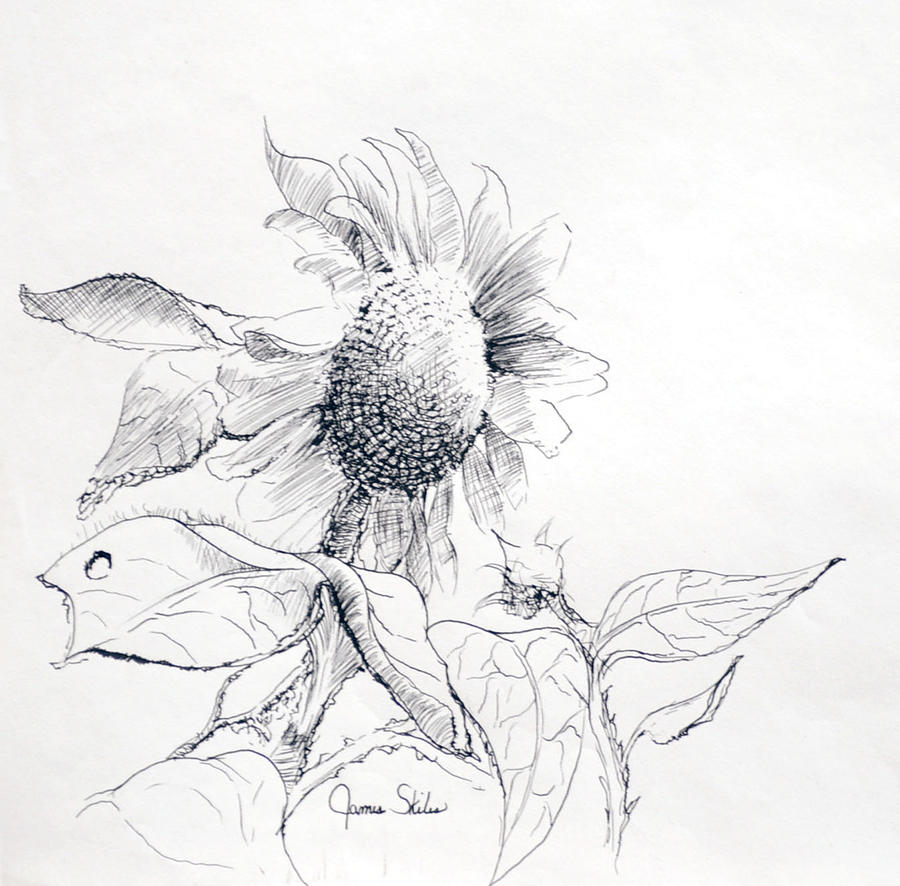 Sunflower Drawing - Whimsical Sunflower  by James Skiles