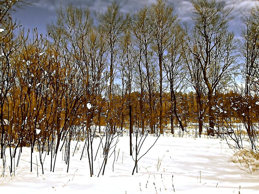 Winter Photograph - Whimsical Winter by Elizabeth Tillar