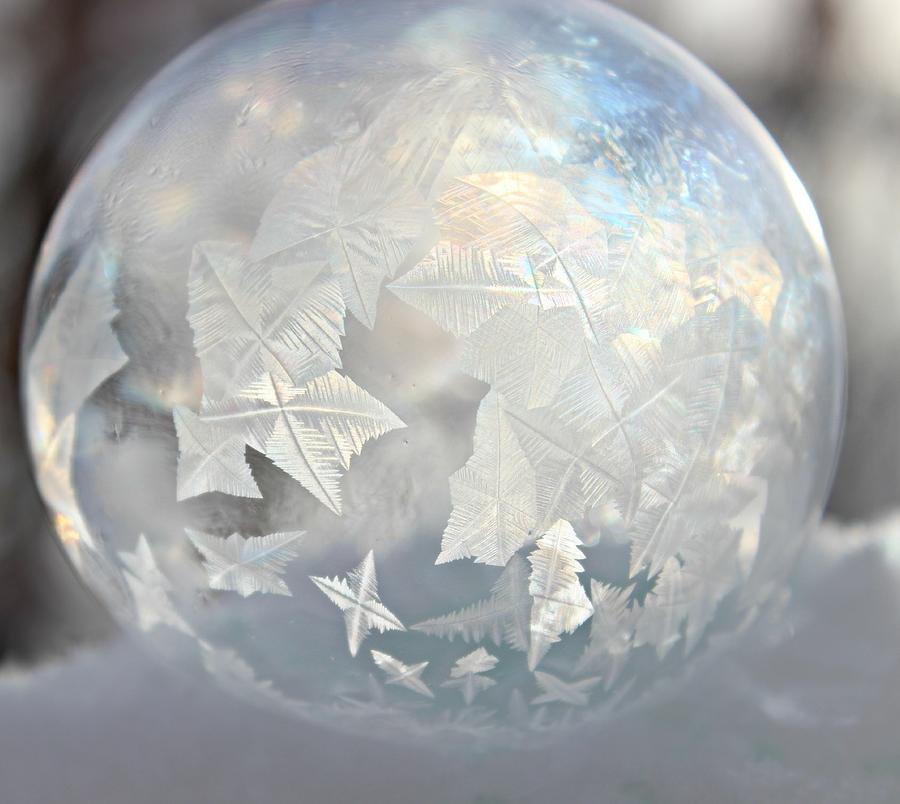 Winter Photograph - Whimsy Beauty by Candice Trimble