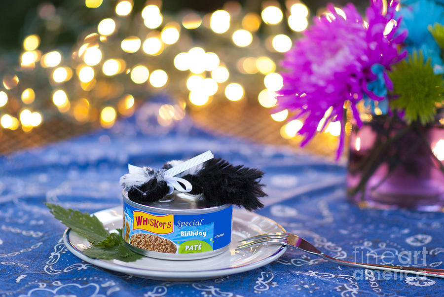 Birthday Photograph - Whiskers Special Birthday Pate by Juli Scalzi