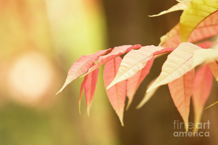 Leaves Photograph - Whisper by Andrew Brooks