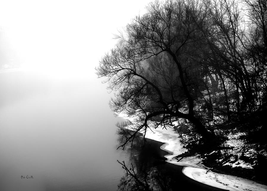Tree Photograph - Whisper by Bob Orsillo