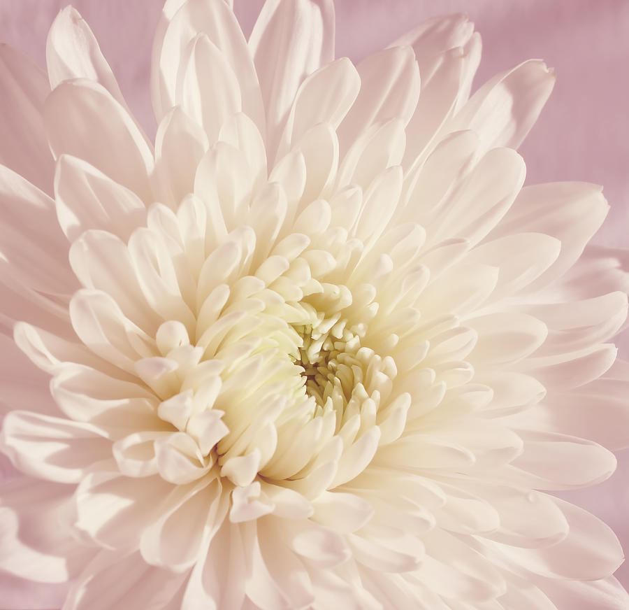 Flower Photograph - Whispering White Floral by Kim Hojnacki