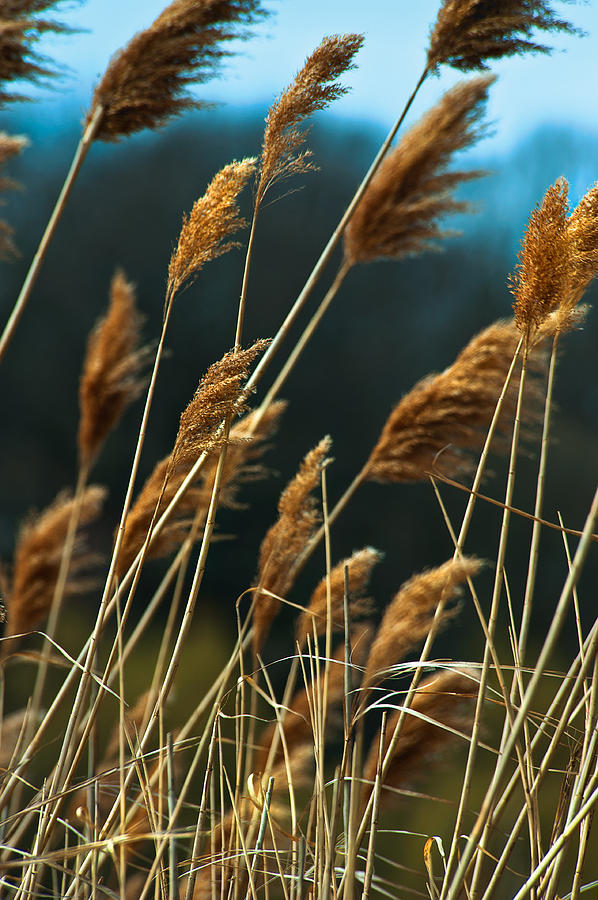 Sky Photograph - Whistling Wind by Mike Feraco