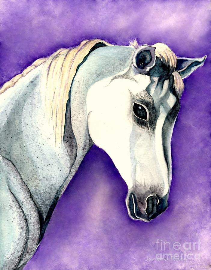White Arabian Horse Painting - White Arabian Horse  by Janine Riley