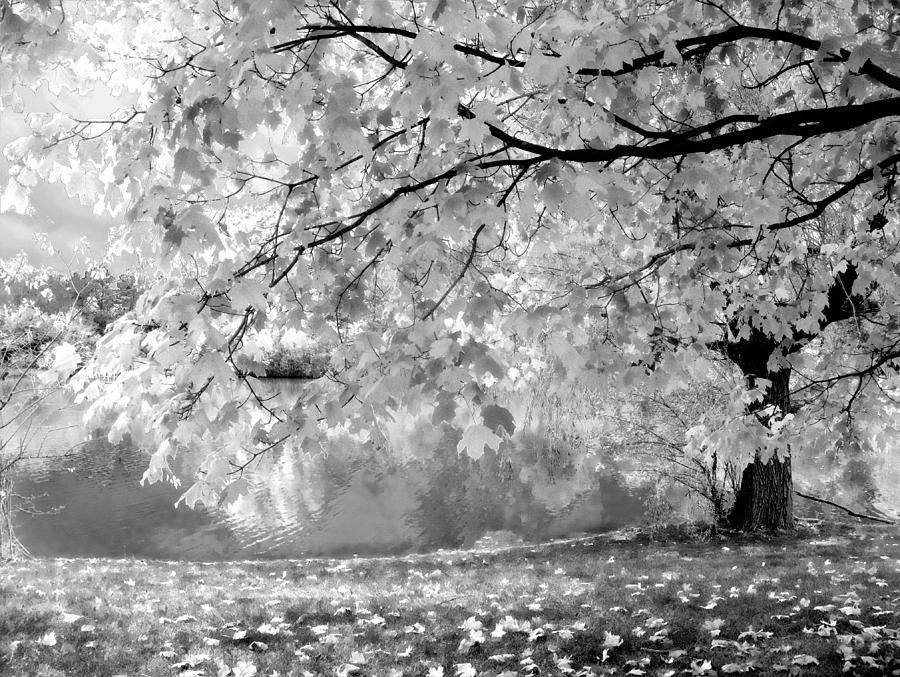 White Autumn Photograph