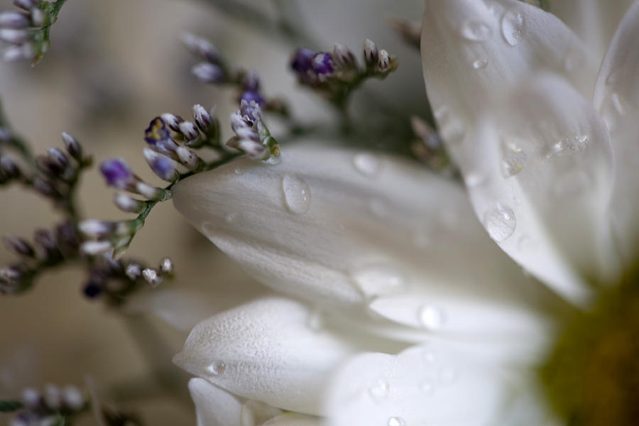 Flower Photograph - White Beauty by John Holloway
