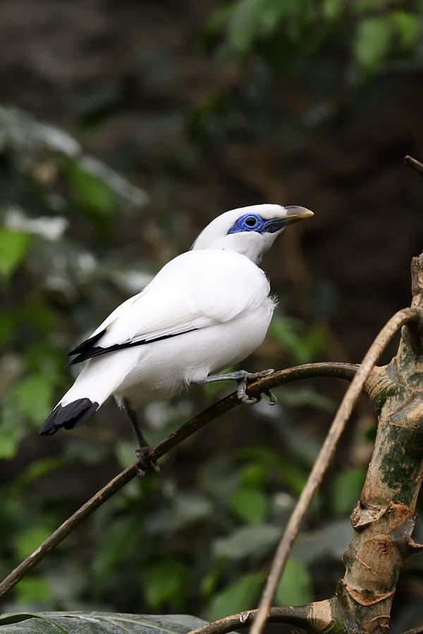 White Photograph - White Bird by Goyo Ambrosio
