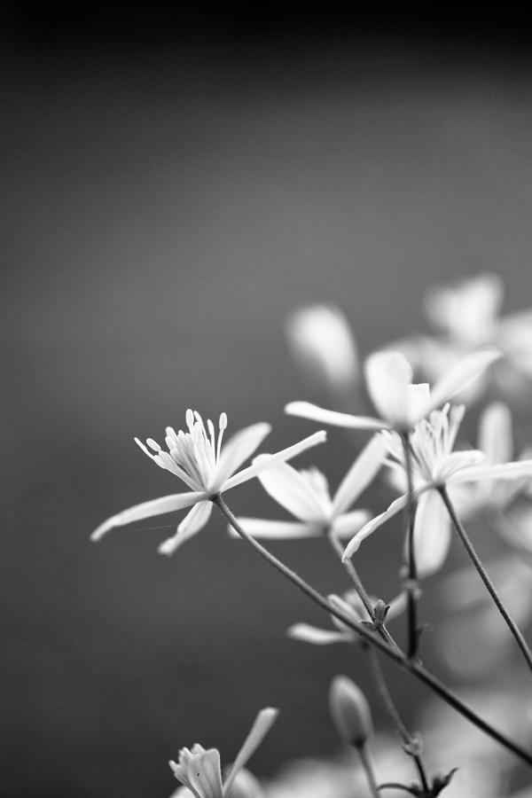 White Photograph - White Blooms by Nathaniel Kidd