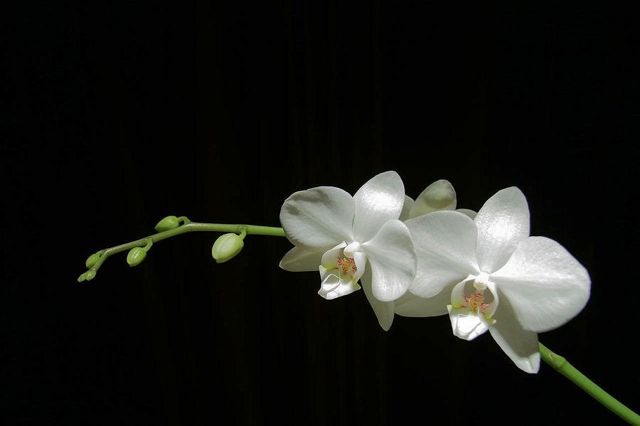 White blossoms by David Rich