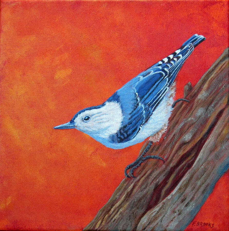 White-Breasted Nuthatch by Fran Brooks