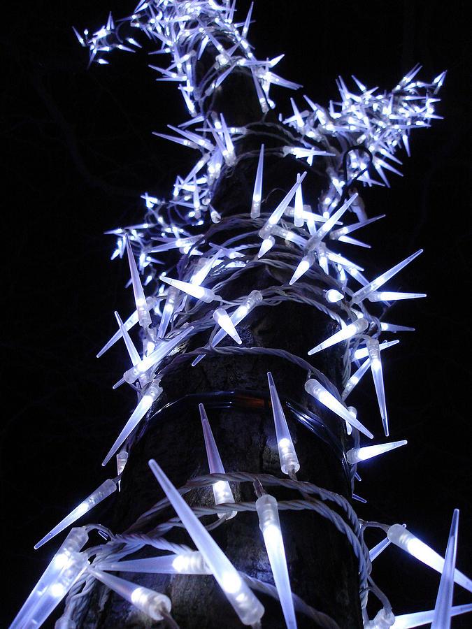 Tree Photograph - White Christmas Tree by Michel Mata