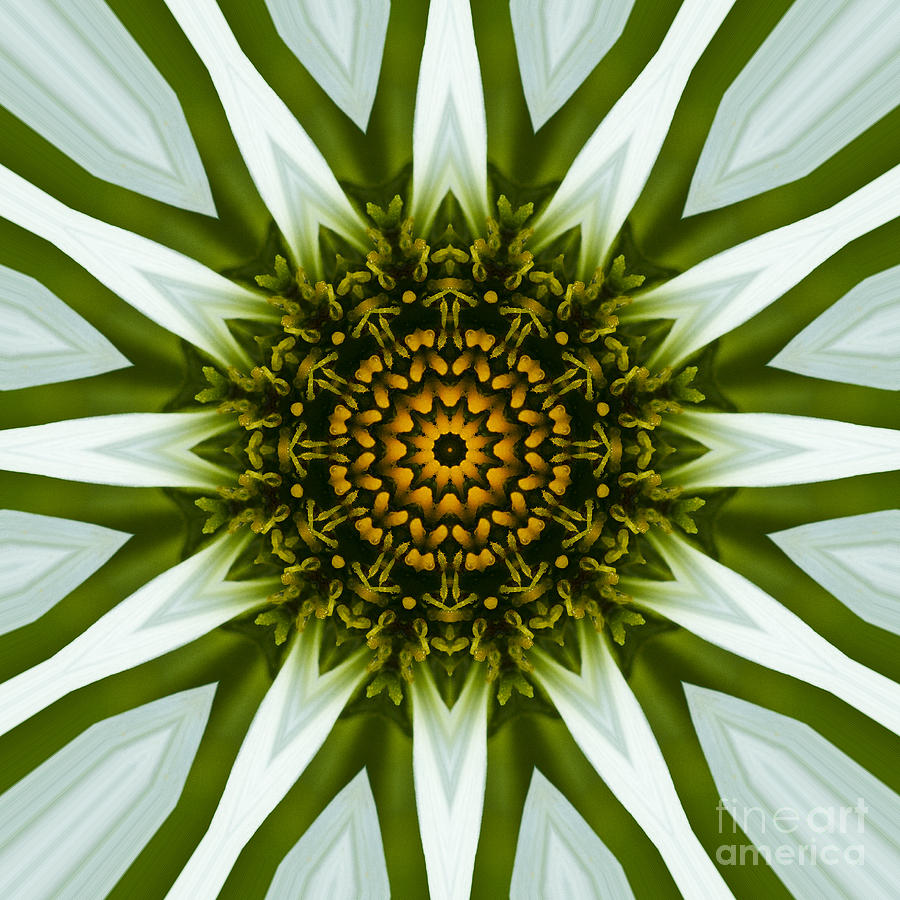 White coneflower mandala 12 photograph by carrie cranwill mandala photograph white coneflower mandala 12 by carrie cranwill mightylinksfo