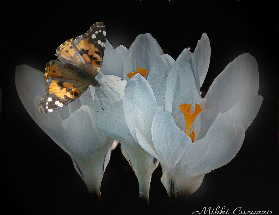 Spring Photograph - White Crocus With Monarch Butterfly by Mikki Cucuzzo
