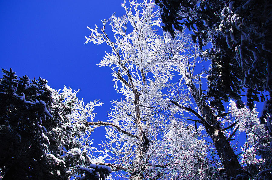 Jackson Photograph - White Crystal by Rockybranch Dreams