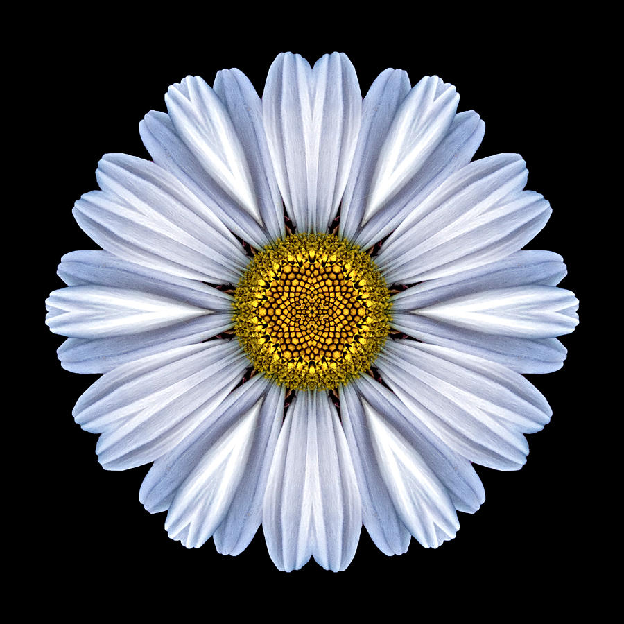 White Daisy Flower Mandala Photograph By David J Bookbinder