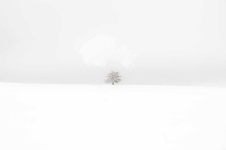 Tree Photograph - White Desolation by Emily Stauring