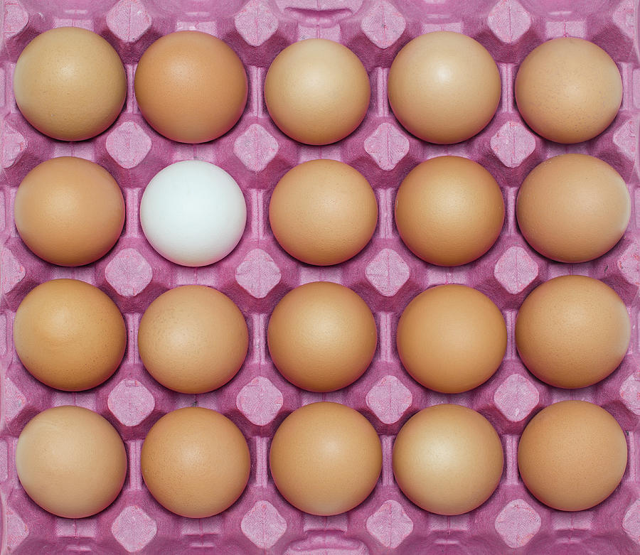 White Egg With Large Group Of Brown Photograph by Ozgur Donmaz