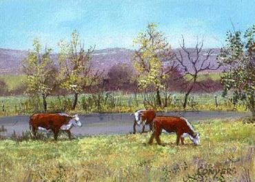 Cows Painting - White Face Cows In Pasture by Peggy Conyers