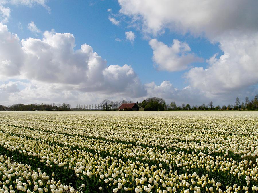 White field by Luc Van de Steeg