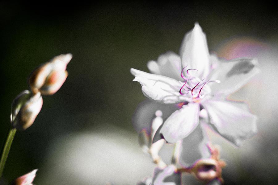 White Flower II by Bradley R Youngberg