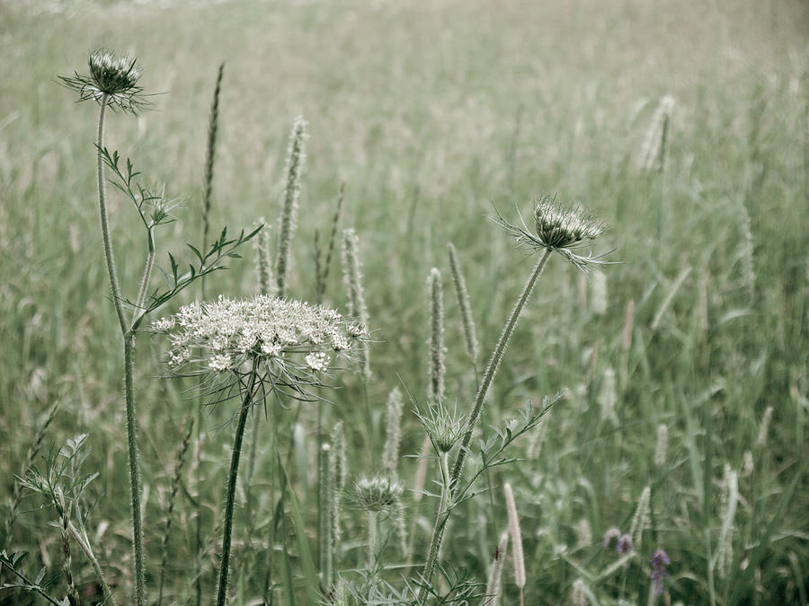 Pixels Photograph - White Flower In A Meadow by Rob Huntley