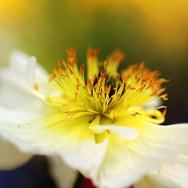 Beautiful Photograph - White Flower In Close Up by Luisa Azzolini