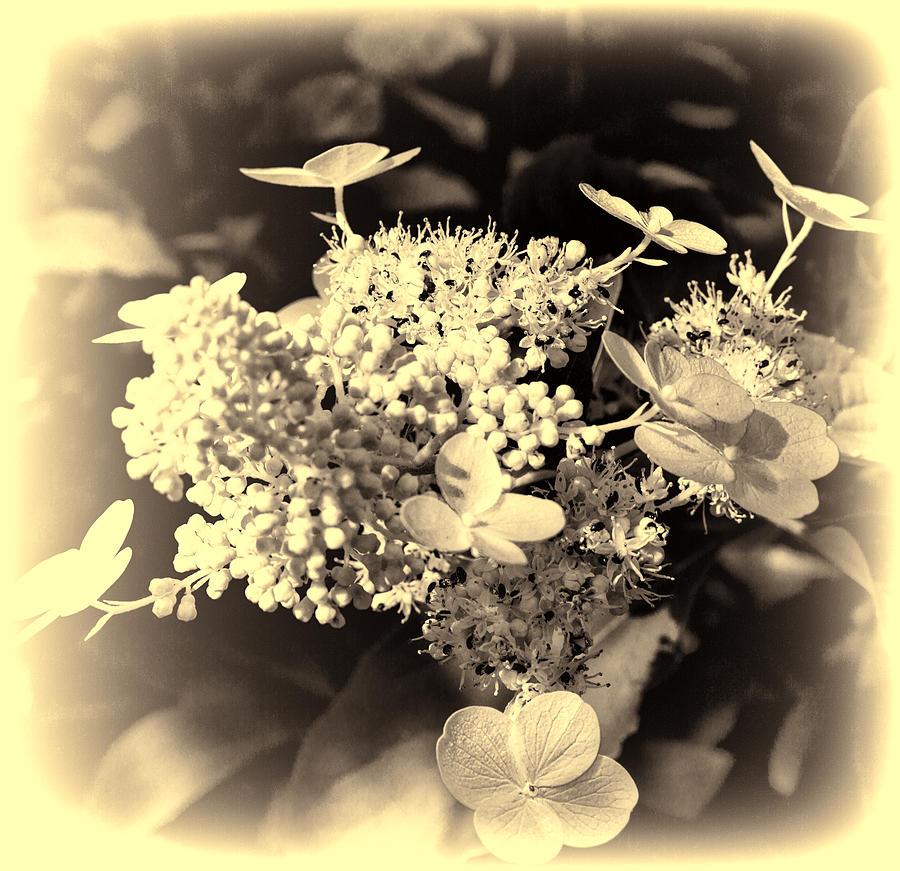 White Photograph - white flower SV by Leif Sohlman