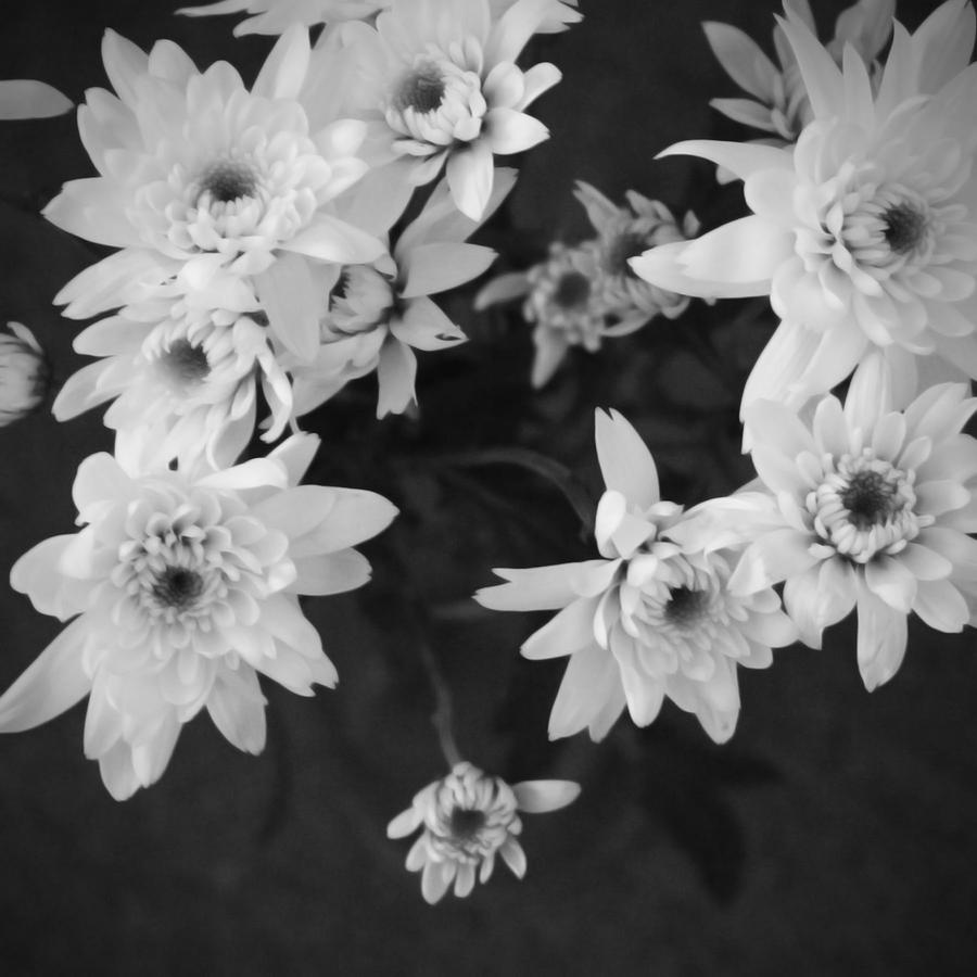 White Flowers Black And White Photography Photograph By Linda Woods