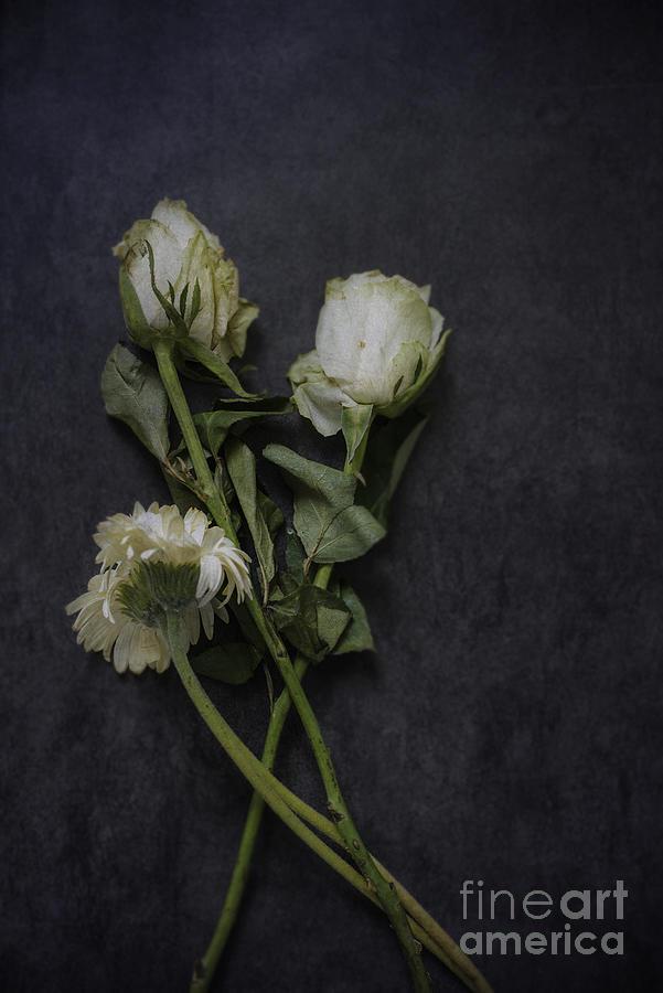 White flowers photograph by david lichtneker flowers photograph white flowers by david lichtneker mightylinksfo