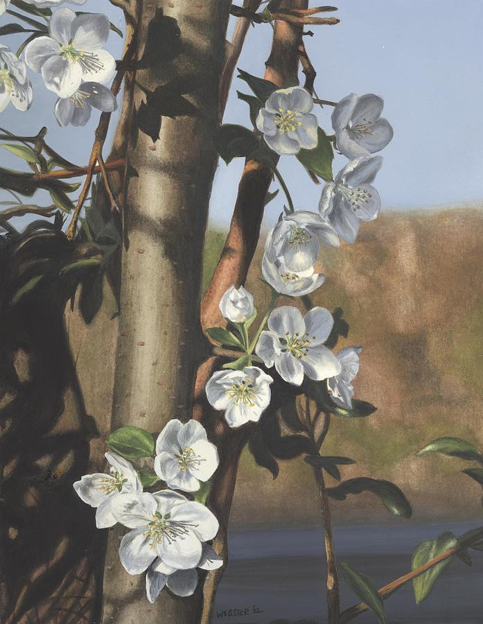 Flowers Painting - White Flowers by Michele Renee