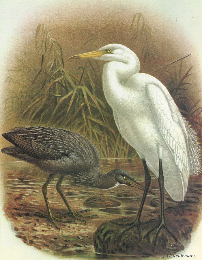characterization of sylvia in sarah orne jewetts a white heron When a white heron appeared in 1886 as the title story in sarah orne jewett's collection a white heron and other stories, the author was already established as one of the finest local color writers the united states had produced.