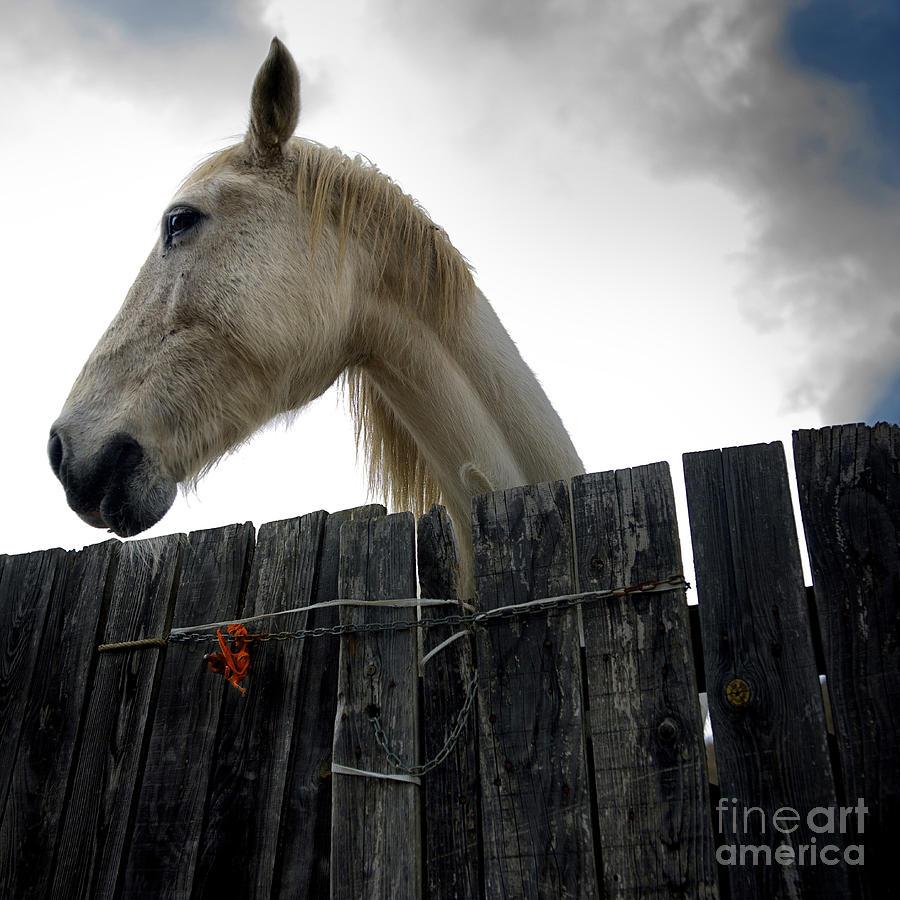 Animals Photograph - White Horse by Bernard Jaubert