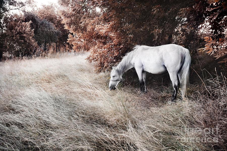 Horse Photograph - White Horse by Jelena Jovanovic