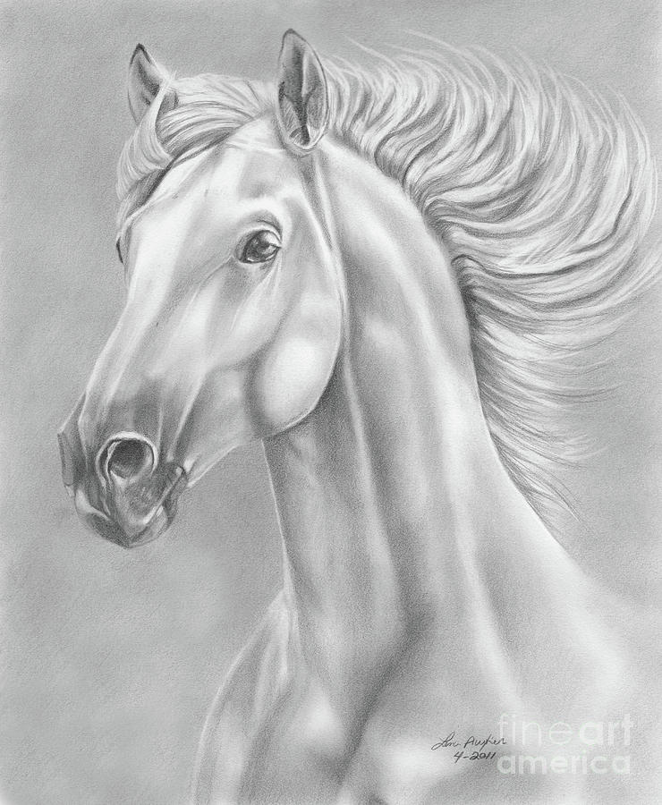 White Horse Drawing By Lena Auxier