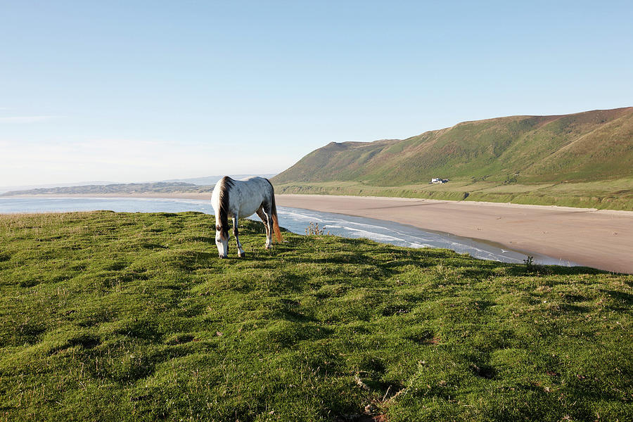 White Horse On Grassy Headland Photograph by Tirc83
