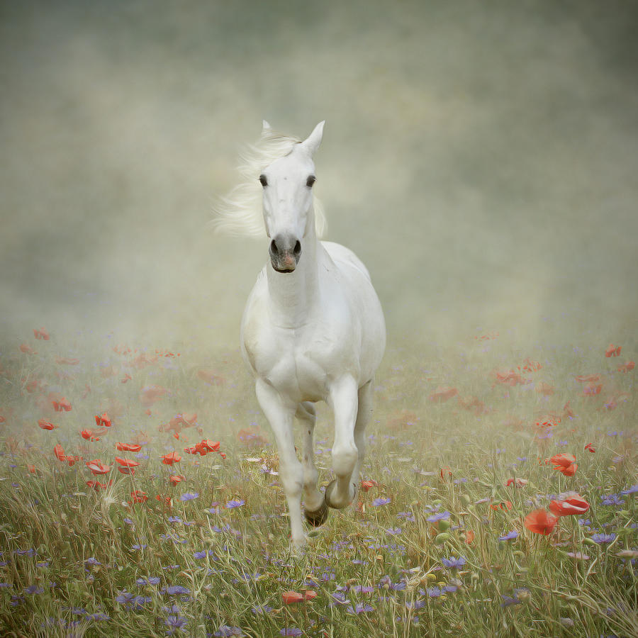 White Horse Running Through Poppies Photograph by Christiana Stawski