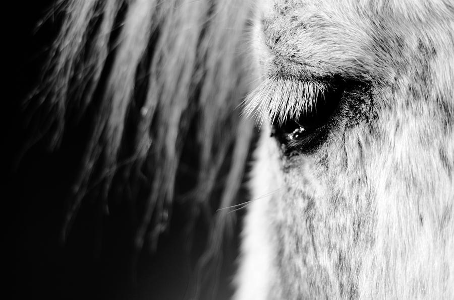 White Photograph - White Horse  by Tommytechno Sweden