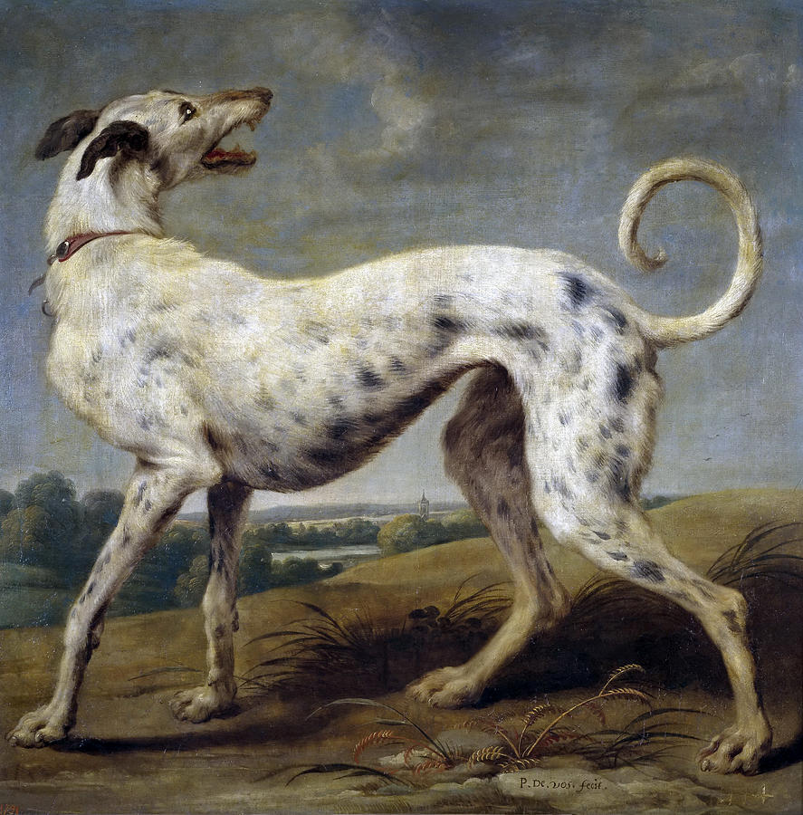 Paul De Vos Painting - White Hound by Paul de Vos