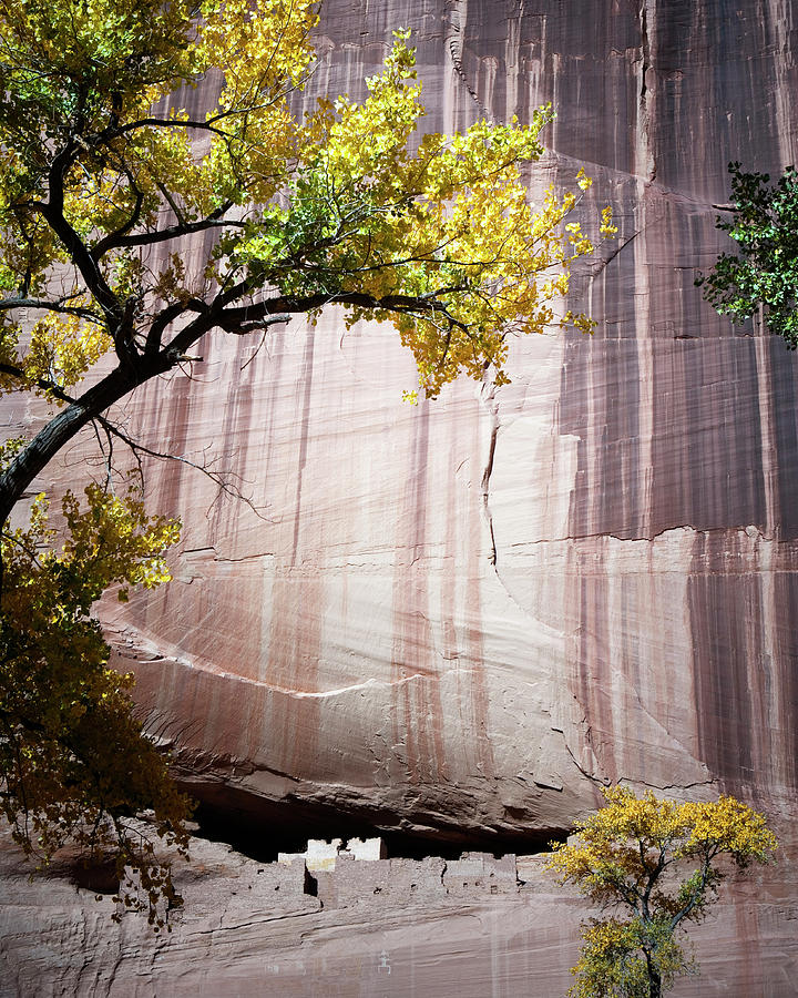 Ancient Civilization Photograph - White House Ruins, Canyon De Chelly by Ron Koeberer