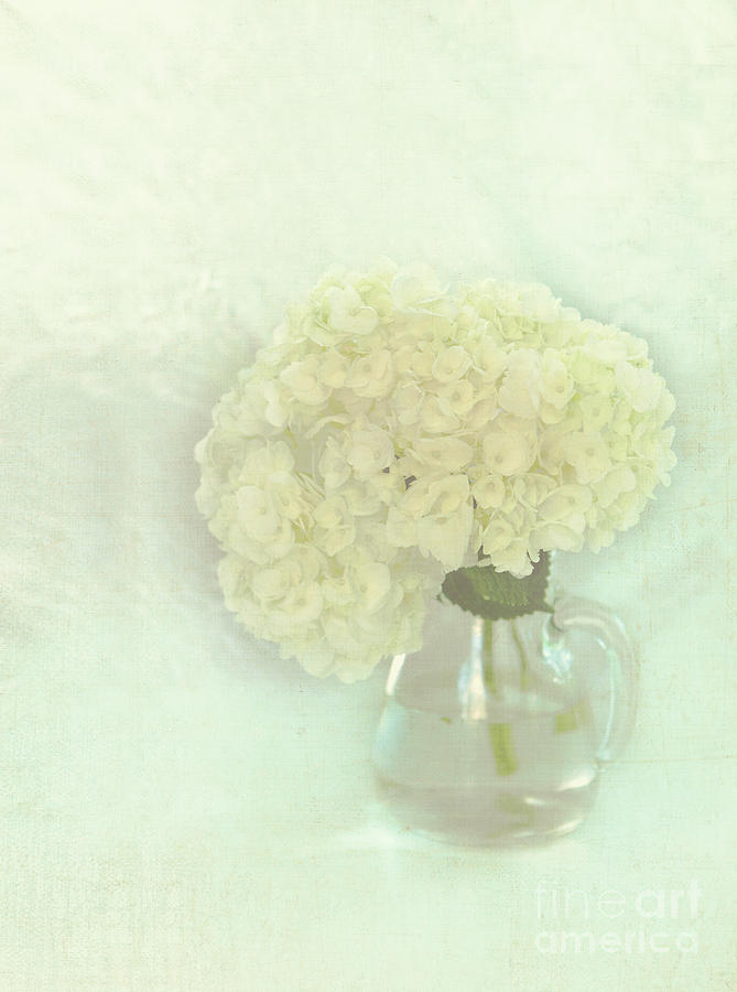 Floral Photograph - White Hydrangeas by Kay Pickens