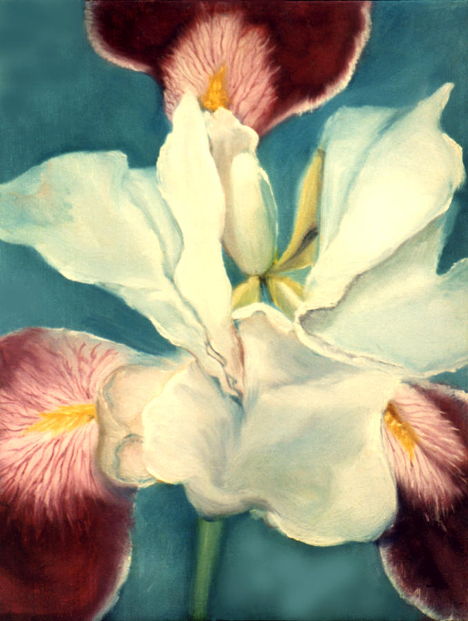 Flowers Painting - White Iris by Anni Adkins