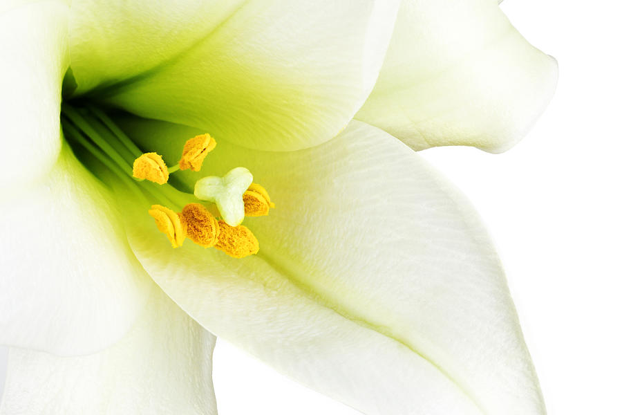 Beautiful Photograph - White lilly macro by Johan Swanepoel