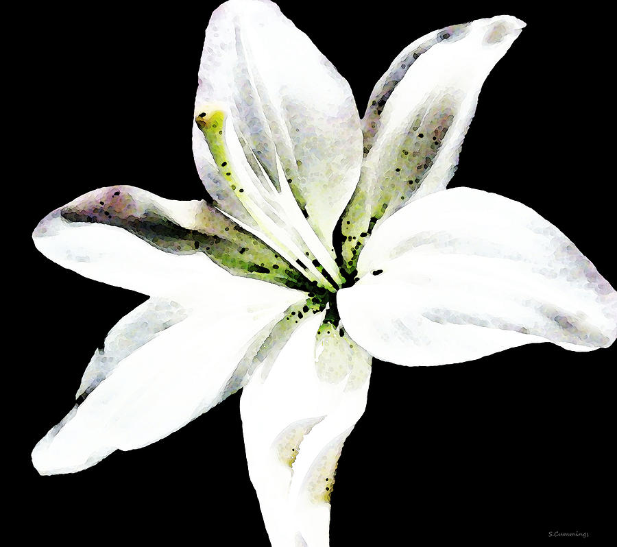 white lily elegant black and white floral art by sharon