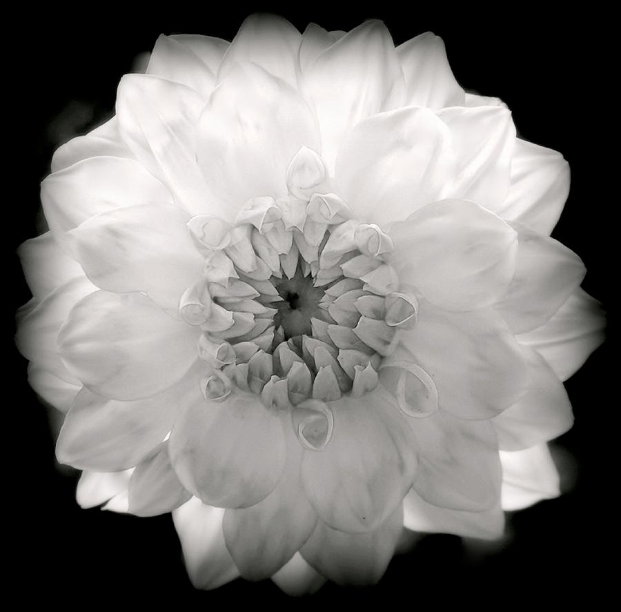 White Flowers Photograph - White Magic by Karen Wiles